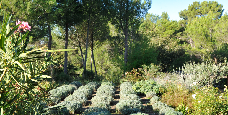 Jardin m diterran en saint marc de jaumegarde - Creation jardin mediterraneen saint paul ...